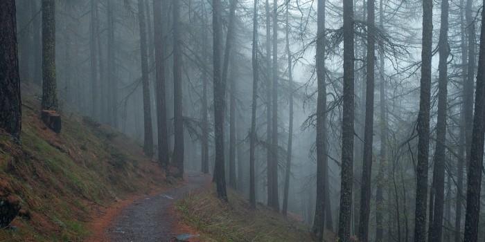 trees-700x350